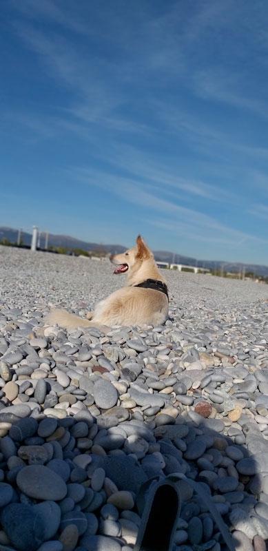 Willy sulla spiaggia