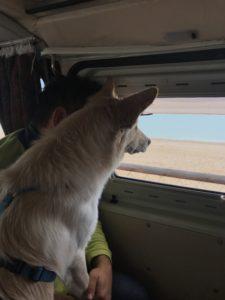 Willy e la spiaggia di Numana, Marche